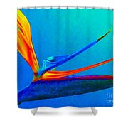 Bird Of Paradise With Blue Background Shower Curtain