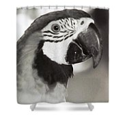 Black And White Parrot Beauty Shower Curtain