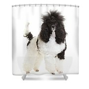 Black And White Poodle Shower Curtain