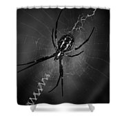 Black And Yellow Argiope Shower Curtain by Ben Shields