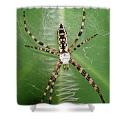 Black And Yellow Garden Spider Shower Curtain