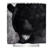 Black Bear Curtsy  Shower Curtain