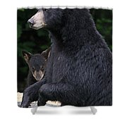 Black Bear With Cub Shower Curtain