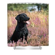 Black Labrador Dog Shower Curtain