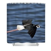 Black-necked Stilt Shower Curtain