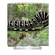 Black Swallowtail Caterpillar Shower Curtain
