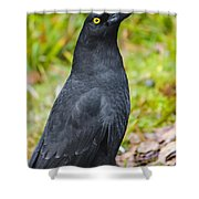 Black Tasmanian Crow Standing In Green Forest Shower Curtain