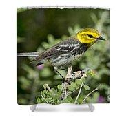 Black-throated Green Warbler Shower Curtain