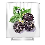 Artz Vitamins Series The Blackberries Shower Curtain