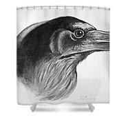 Blackburn Birds, 1895 Shower Curtain