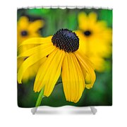 Blackeyed Susan Shower Curtain