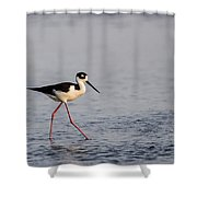 Blacknecked Stilt Shower Curtain