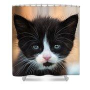 Black And White Kitten Shower Curtain