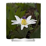 Bloodroot Wildflower - Sanguinaria Canadensis Shower Curtain