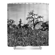 Blue Bonnets-black And White Shower Curtain