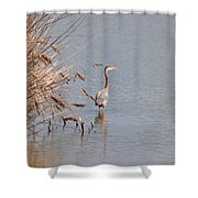 Blue Heron In The Wild Shower Curtain