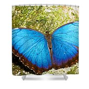 Blue Morpho Butterfly Shower Curtain