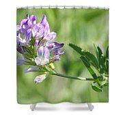 Blue Wild Flower Shower Curtain