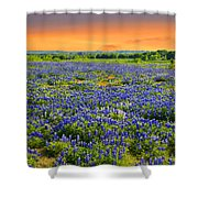 Bluebonnet Sunset  Shower Curtain