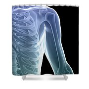 Bones Of The Shoulder And Chest Shower Curtain