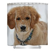 Bongo In The Snow Shower Curtain