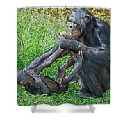 Bonobo Adult Playing With Baby Shower Curtain