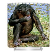 Bonobo Shower Curtain