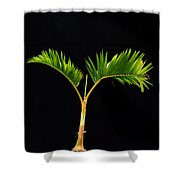 Bonsai Palm Tree Shower Curtain