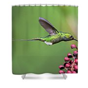 Booted Racket-tail Shower Curtain