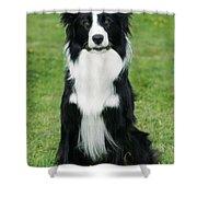 Border Collie Dog Shower Curtain