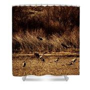 Bosque Del Apache New Mexico-sand Cranes V2 Shower Curtain
