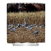 Bosque Del Apache New Mexico-sand Cranes V3 Shower Curtain