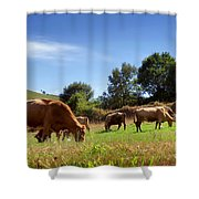 Bovine Cattle  Shower Curtain by Carlos Caetano