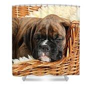 Boxer Puppy Shower Curtain