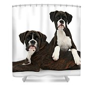 Boxer Pups Shower Curtain by Mark Taylor