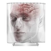 Brain And Nerves Of The Head Shower Curtain