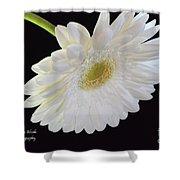 Bright White Gerber Daisy # 2 Shower Curtain