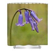 British Bluebell Hyacinthoides Non Scripta Shower Curtain
