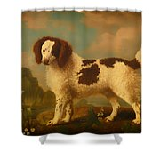 Brown And White Norfolk Or Water Spaniel Shower Curtain