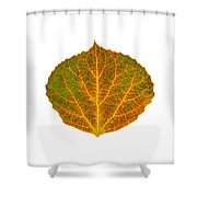 Brown Green Orange And Yellow Aspen Leaf 1 Shower Curtain
