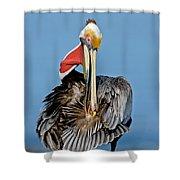 Brown Pelican Preening Shower Curtain