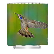 Brown Violet-ear Hummingbird Shower Curtain