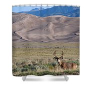 Buck At Great Sand Dunes Shower Curtain