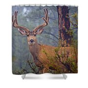 Buck Deer In A Mystical Foggy Forest Scene Shower Curtain