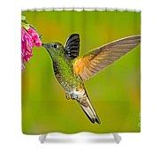 Buff-tailed Coronet Hummingbird Shower Curtain