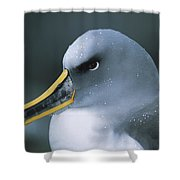 Bullers Albatross With Colorful Bill Shower Curtain