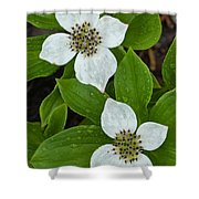 Bunchberry Shower Curtain