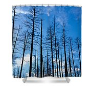 Burnt Pine Trees In A Forest, Grand Shower Curtain