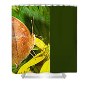 Butterfly Mimicry Shower Curtain