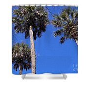 Cabbage Palms Shower Curtain